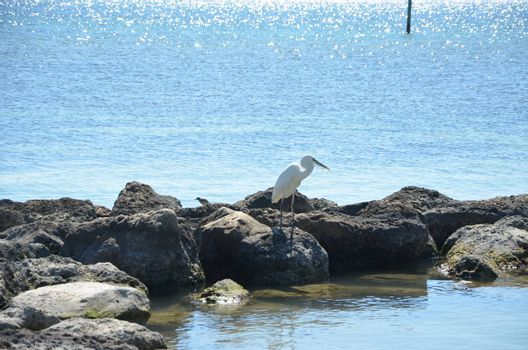 Bird on the rocks in the warm florida water