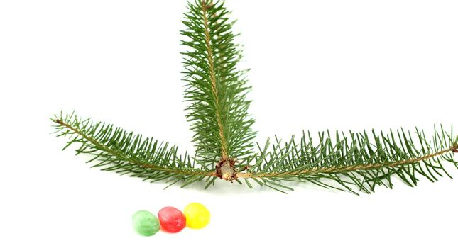 picture of a evergreen tree twigs and sweet candies
