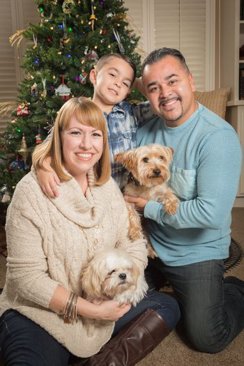 Happy Young Mixed Race Family and Puppies In Front of Christmas Tree.