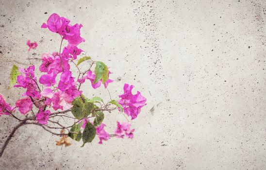 Blooming red flower blended into concrete wall background with copy space on the right