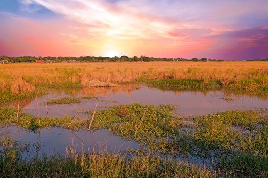 Beautiful sunset on the rice fields near Yangon in Myanmar