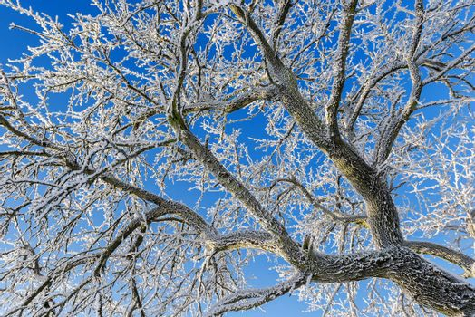 frozen branches on blue sky