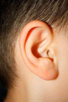 little boys ear - macro look on part.
