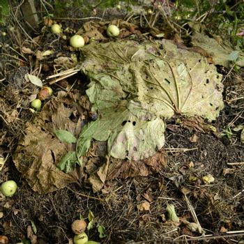 Woodland ground full frame with compost leaves in autumn.