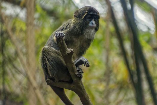 Apprehensive Monkey