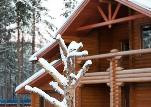 Cottage made of wood in an ecologically clean area