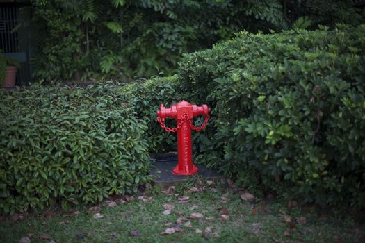 Rred fire hydrant in park