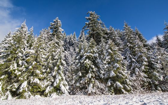 Snow-Covered Trees Under Blue Skies and Clouds