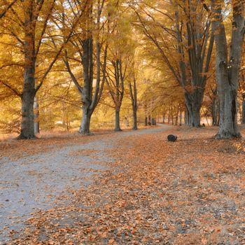 Beautiful autumn forest in Ekero - Sweden.