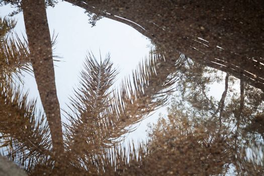 Tree reflection on spring water, stock photo