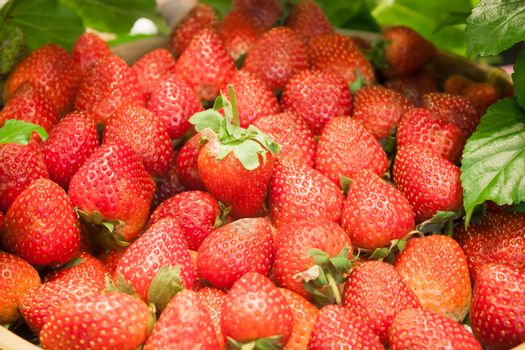 Background of freshly harvested strawberries, stock photo