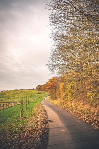 Curvy road in a countryside landscape in the fall with colorful trees and bushes by the road in a rural scenery