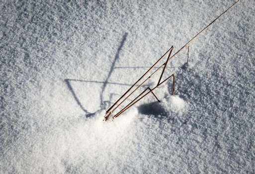 Blades of grass sticking out of the snow