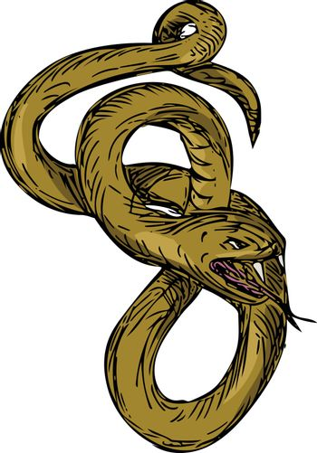 Viper Coiled Ready To Pounce Drawing
