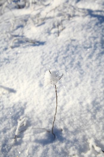 Lonely twig covered in snow on a sunny day