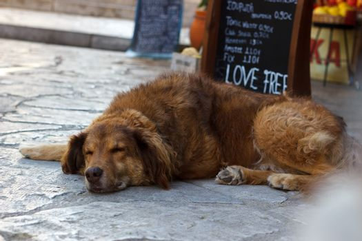 Relaxing sleeping dog