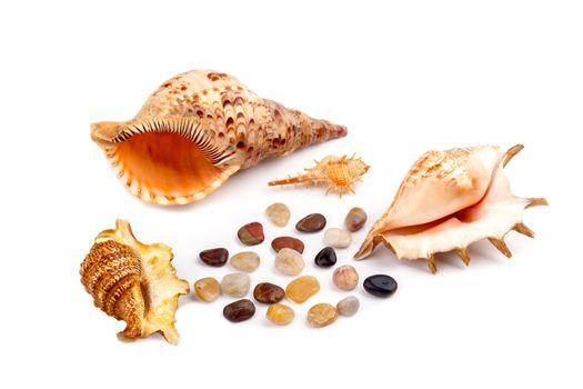 Sea shells and stones