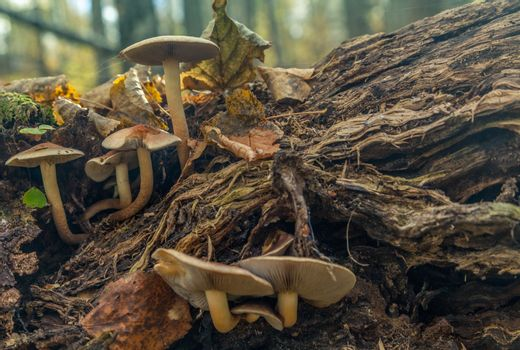 Closeup view of mushrooms in autumn forest