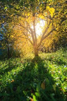 Sunlight through the tree in warm autumn