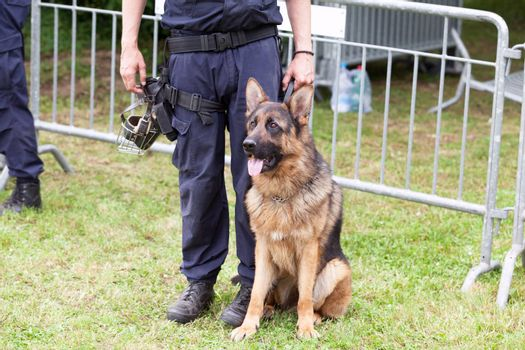 Police officer with a german shepherd police dog