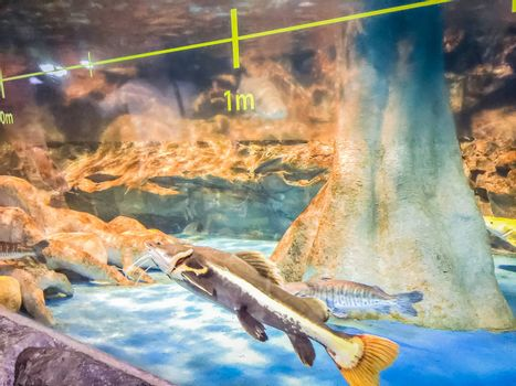 Fishes in Hanwah Aqua Planet Jeju, located nearby Seopjikoji and offers versitle features, including an aquarium as the main attraction, Marine Science, Kiz Planet and many more convenience facilities.