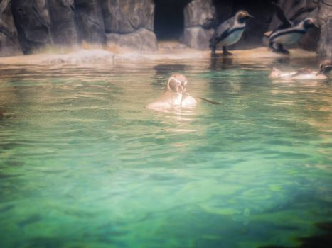 Penguins in Hanwah Aqua Planet Jeju, located nearby Seopjikoji and offers versitle features, including an aquarium as the main attraction, Marine Science, Kiz Planet and many more convenience facilities.