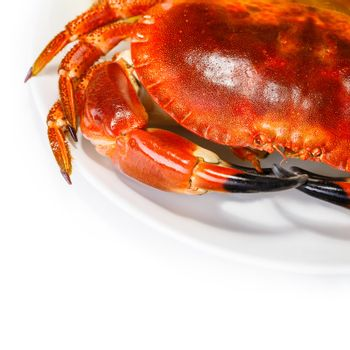 Tasty prepared crab