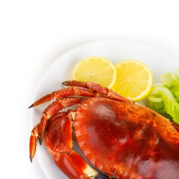 Red tasty boiled crab