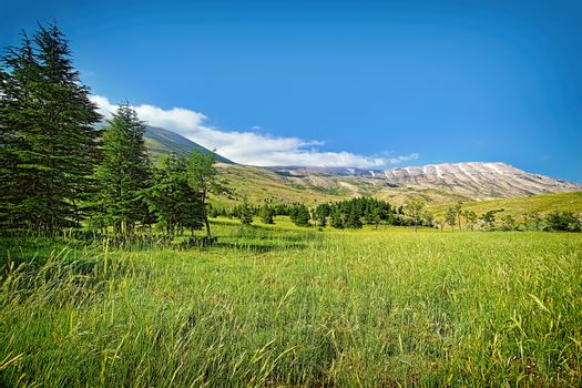 Beautiful nature landscape, amazing view on mountainous valley with Cedar trees, gorgeous nature of Lebanon