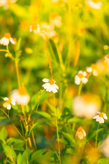 Grass flower causes the allergic symptoms