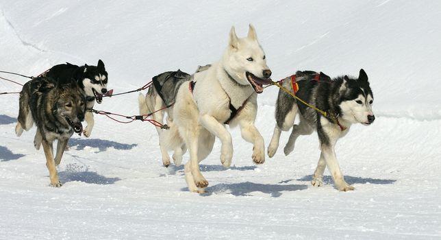 sportive dogs