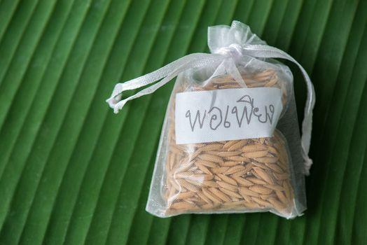 thai paddy rice