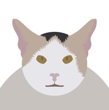 Vector portrait of cute male Thai cat face looking at camera isolated on white background