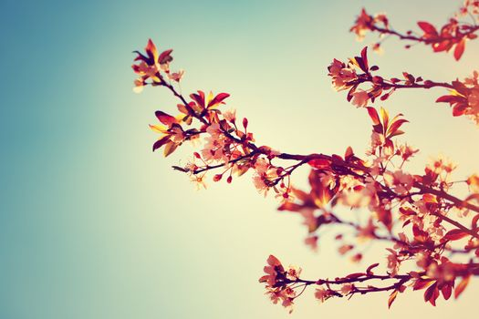 Beautiful blooming tree border