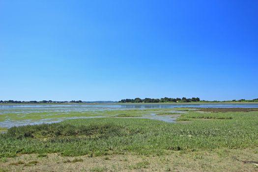 Salt marsh landscape
