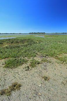Salt marsh landscape France