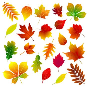 Set of different autumn leaves on a white background.