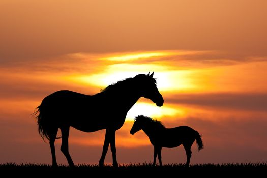colt with the mare at sunset
