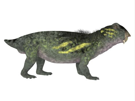 Lystrosaurus was a dicynodont therapsid dinosaur that lived in the Permian and Triassic Periods of Antarctica, India, Africa, China, Mongolia and Russia.