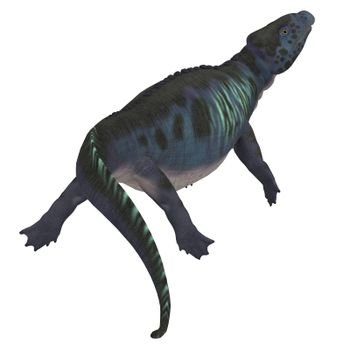 Placodus was a marine reptile that swam in the shallow seas of the Triassic Period in Europe and China.