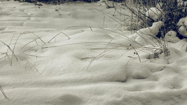 White Wintry Wonderland