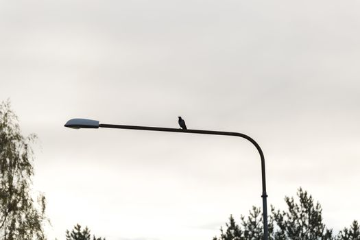 Crow Sitting on Street Light with a cloudy sky.