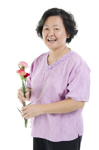 Happy mothers day concept. 60s Asian senior adult woman hand holding carnation flower gift and smiling, isolated on white background.