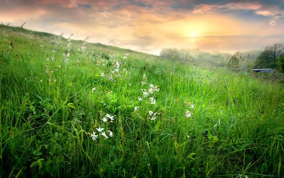 Flowers and grass in countryside at sunrise with fog