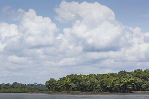Amazon Riverbank
