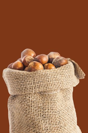 some hazelnuts placed over a colored background