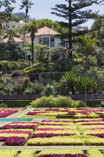 Famous Tropical Botanical Gardens in Funchal town, Madeira island, Portugal