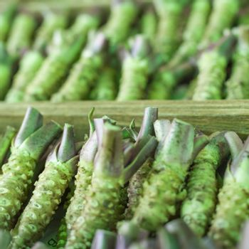 Wasabi root for sale in a typical japanese market
