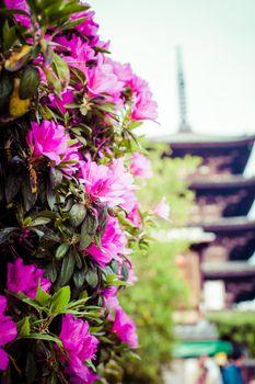 Toji Temple pagoda tower in Kyoto