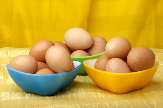 eggs ready to color on yellow background